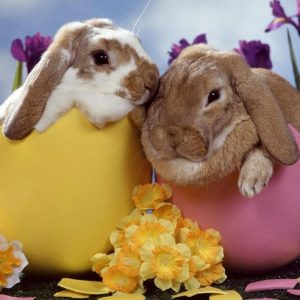 easter-bunny-2-900x675