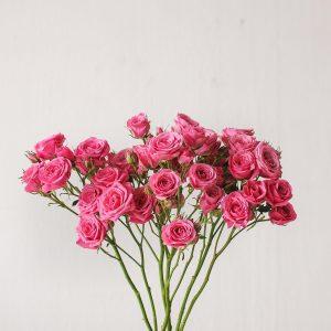 spray-rose-fuchsia
